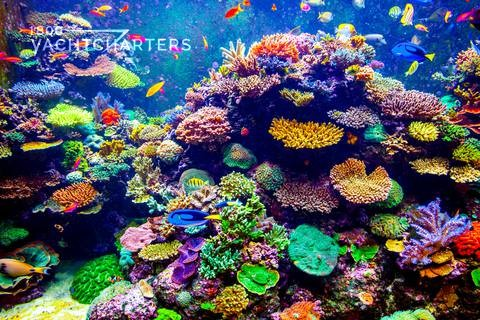 Photograph of a colorful coral reef with tropical fish swimming through it. The predominant color is neon green.