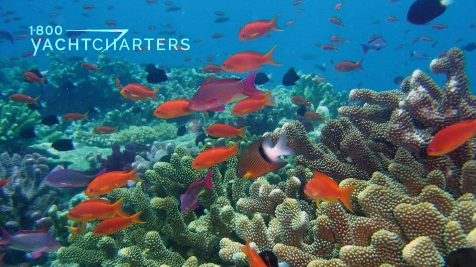 Photograph of underwater reef with colorful orange and black fish swimming over it