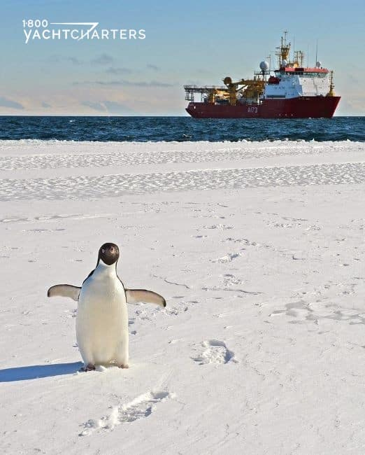 Photograph of live penguin on an ice floe. There is a red-hulled ship in the background. There are footprints in the snow near the penguin.