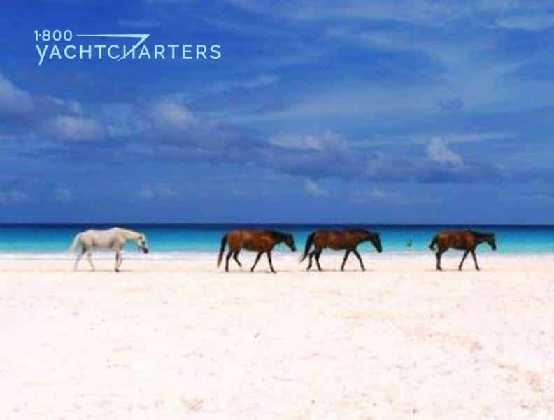 Photograph of 4 wild horses (3 brown and 1 white) walking down the beach, with the ocean, turquoise water, and deep blue sky in the background