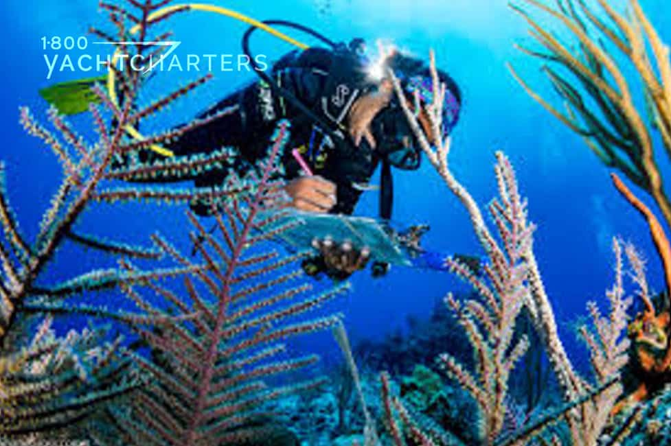 Underwater photograph of a scuba diver over a coral reef