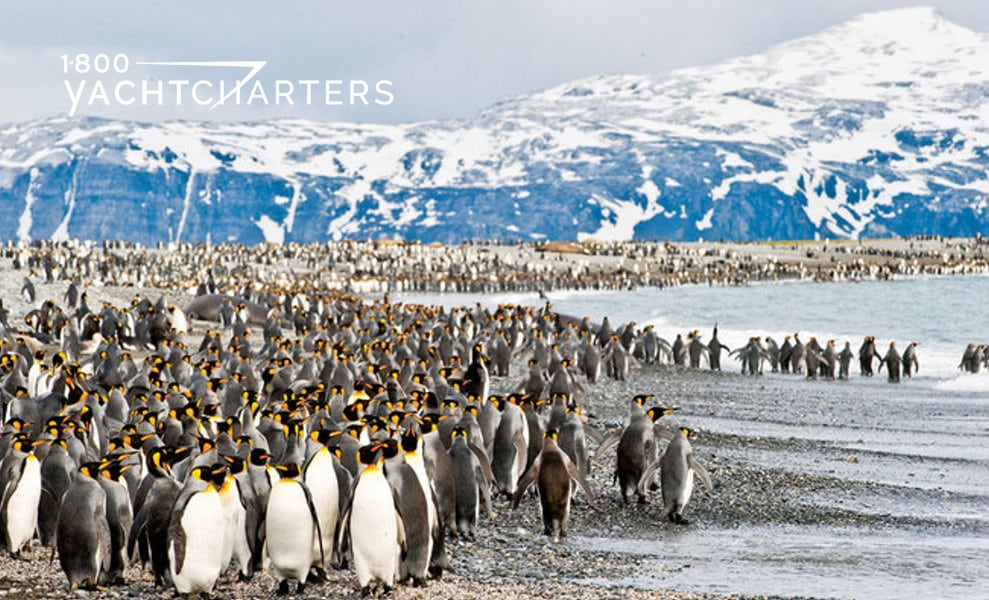 Photograph of thousands of penguins on land in antarctica. Icy mountains in background. Water on right hand side of photo
