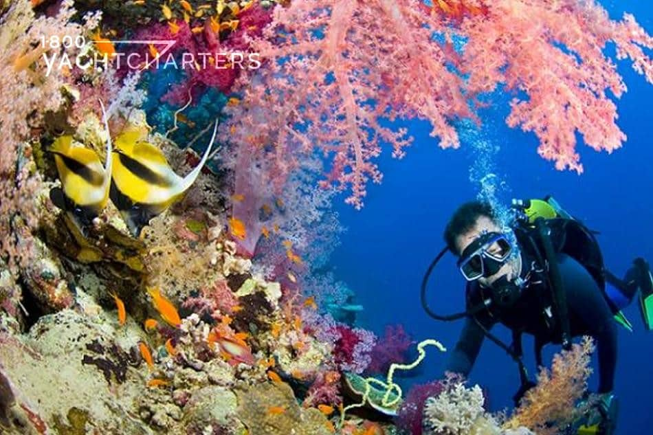 bvi photograph underwater. Scuba diver swimming through a coral reef. Yellow and black striped angelfish swim on left side of picture. Pink fluffy coral hangs overhead. The diver has bubbles coming up from his scuba gear.