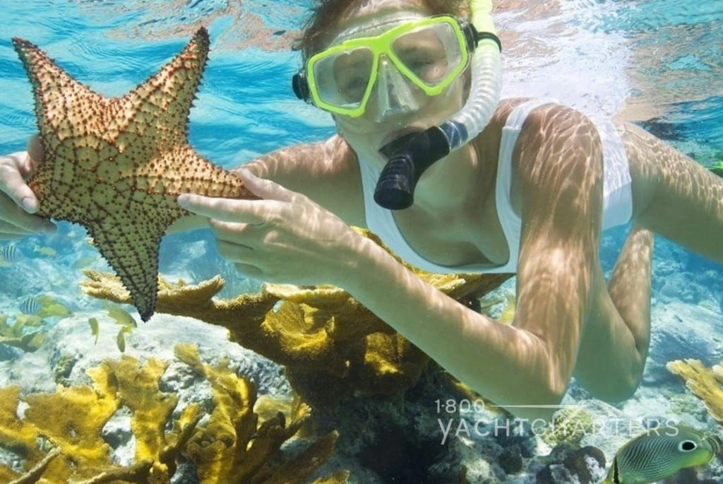 girl snorkeling in key largo florida - holding a large starfish