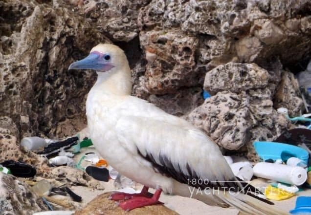 seabird surrounded by plastic and trash in yacht charter destination
