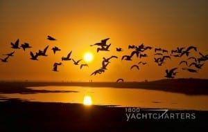Photo of birds flying in orange sunset