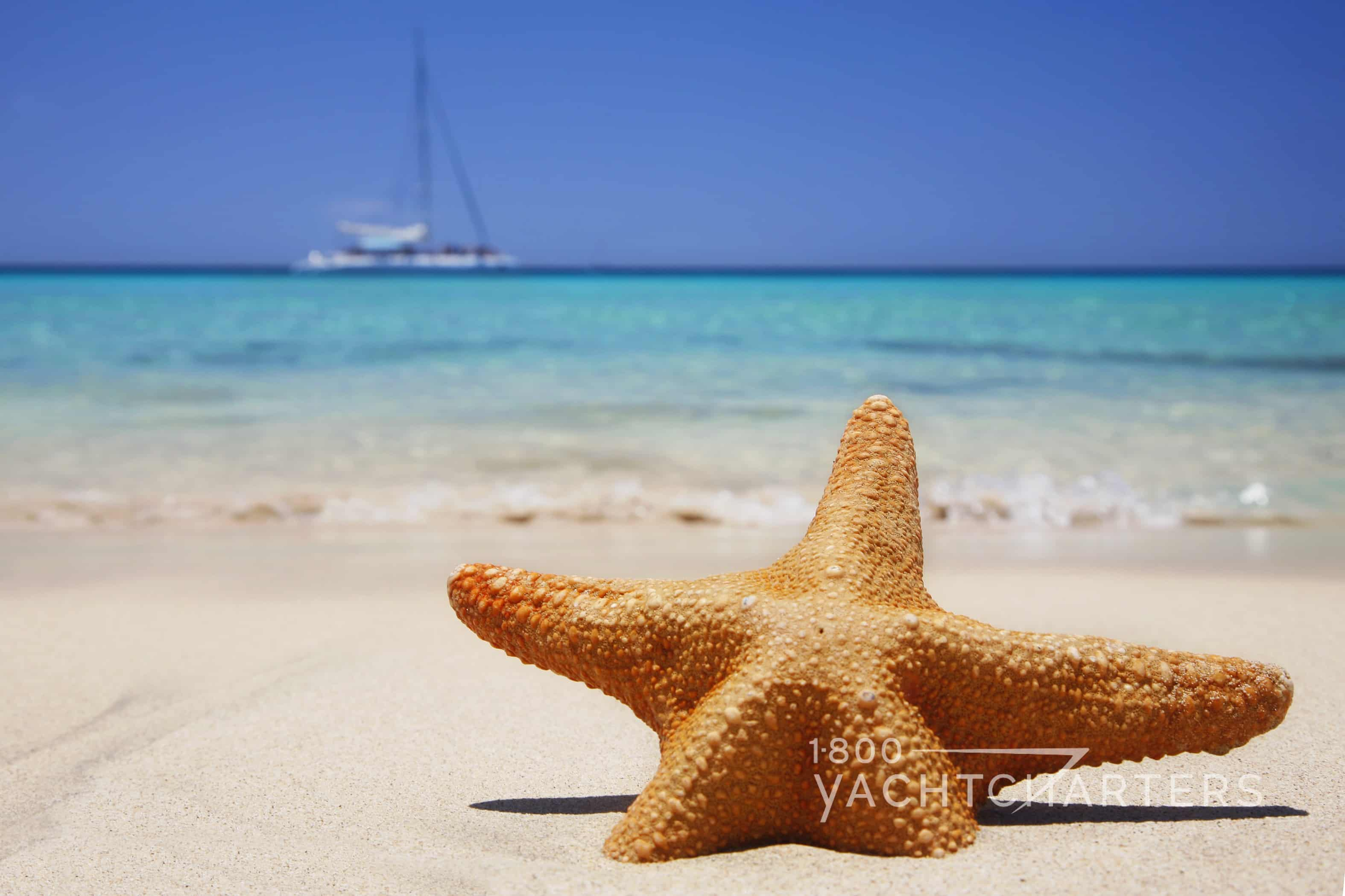 starfish in the sand with sailboat anchored in the sea in the background