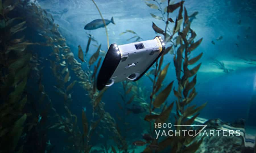 Openrov Trident UAV drone underwater and surrounded by fish and seaweed