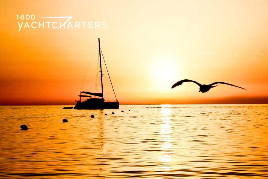 Sunset in background with catamaran sailboat and bird flying overhead