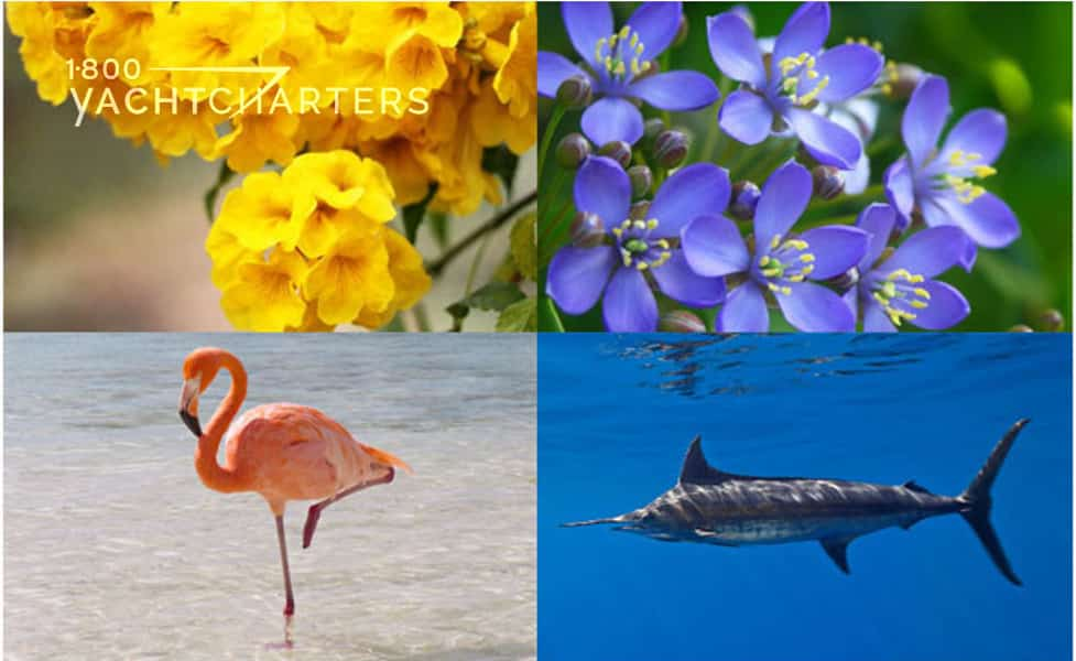 Collage of 4 photos of flowers, a bird, and a fish