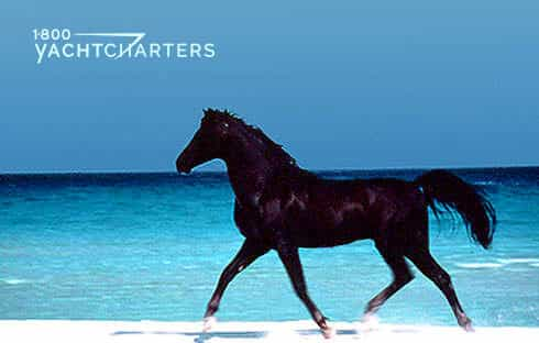 Photograph of a black horse running on the beach. The horse is in the foreground, on sand. It is running toward the left side of the photo. The ocean is in the background and ranges from light blue to turquoise to dark blue water
