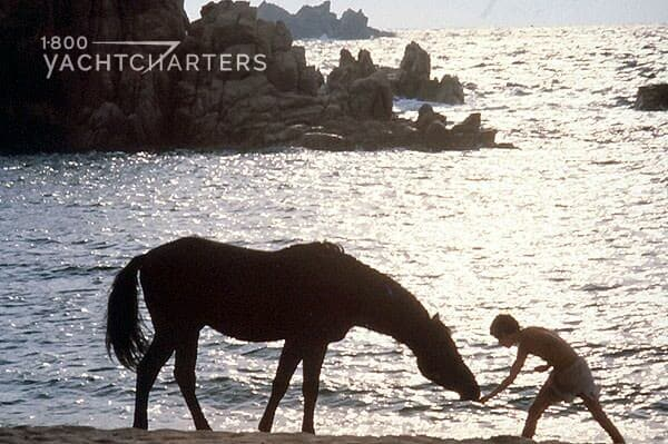 Silhouette photograph of a boy on the right side of the picture, bending down to feed his horse (left side and center of picure). They are on a beach. The ocean is behind them. The sun reflects off of the ocean. There is a cliff to the left side of them. Very picturesque. From the movie, The Black Stallion